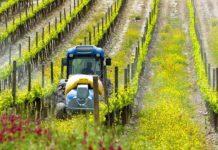 pesticides vignes